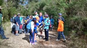 Kariong Glyphs Walk-3