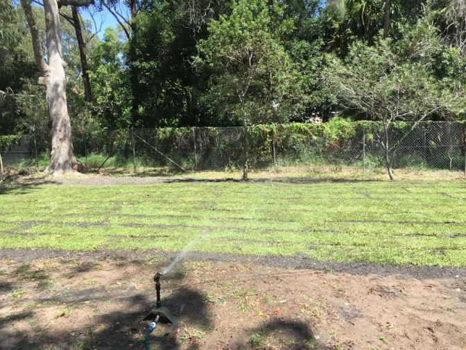 It's a new lawn for our Umina Cub/Joey Hall Grounds
